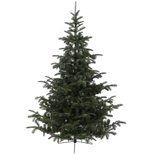 Everlands Nordmann Fir 150